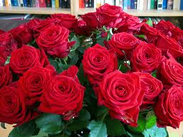 roses for