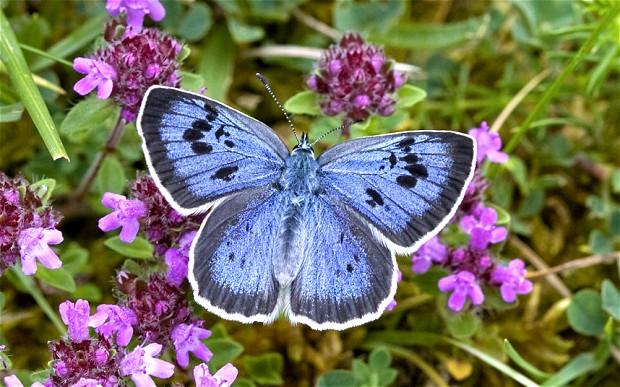 butterfly_2324496b