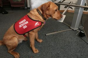 Cancer-Detection-and-Bio-detection-Dogs